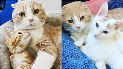 Gatinho ajuda outros animais a se recuperarem em clínica veterinária.