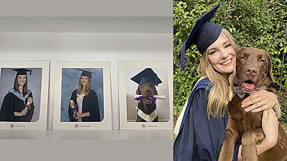 Labrador ganha diploma e foto de formatura para completar mural de família.