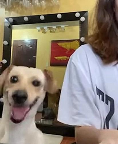 O cachorrinho Luwi.