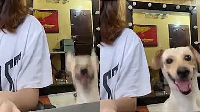 Cachorro tenta chamar a atenção da dona que está trabalhando.