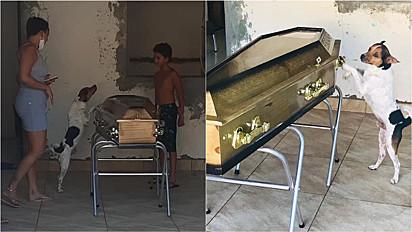 Cachorro permanece ao lado do caixão de tutora durante velório.