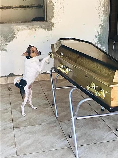O cachorro permaneceu a todo instante ao lado do caixão de sua dona.