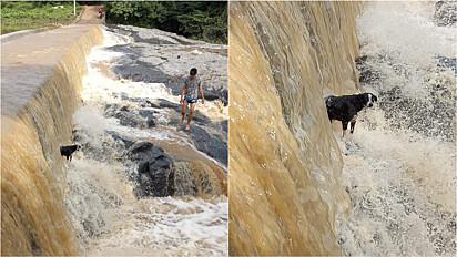 Homens resgatam cachorrinho em meio a Cachoeira do Gonçalves em Dom Quintino, na cidade de Crato, Ceará.
