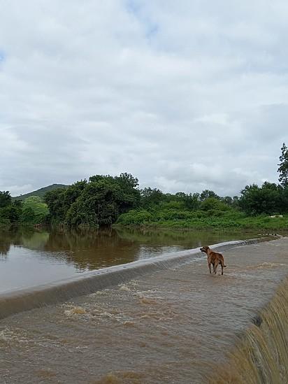 Um dos cachorros que o cãozinho resgatado seguiu.