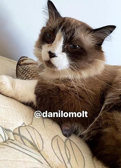 O gatinho Rafael.