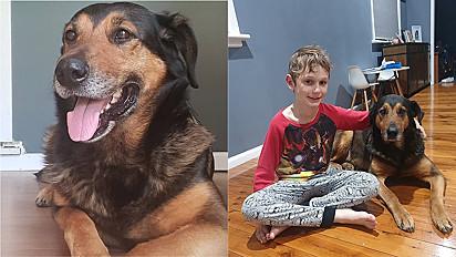 Cadela é negligenciada em atendimento de clínica veterinária em Nova Gales do Sul, Austrália e falece.