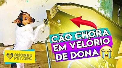 Amo Meu Pet divulga em primeira mão história do cãozinho Toy que emocionou milhões de internautas do Brasil e do Mundo nos últimos dias.