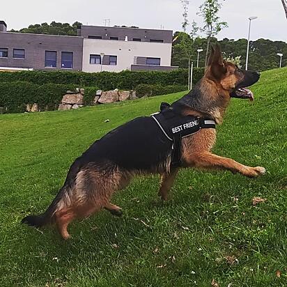 A cachorrinha Jara.