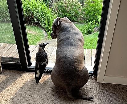 Molly não aparenta querer se separar de Peggy.