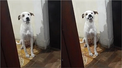 Cachorrinha que adora sorrir quando está feliz encanta internautas.