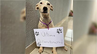 Cachorra diagnosticada com câncer se recupera com o apoio de sua família.