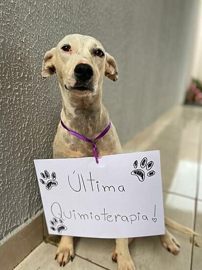 Luma venceu o câncer.