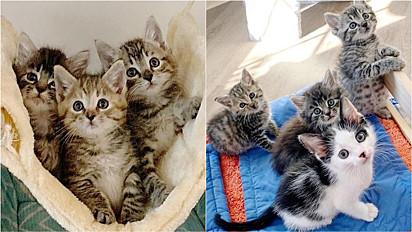 Trio de gatinhos resgatados faz amizade com felino solitário em Carolina do Norte, Estados Unidos.