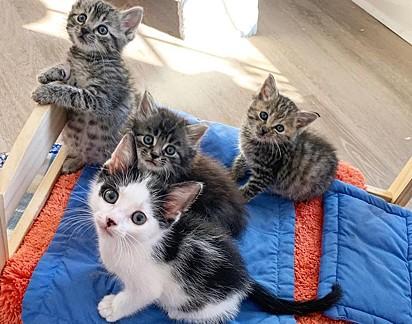 O lindo quarteto.
