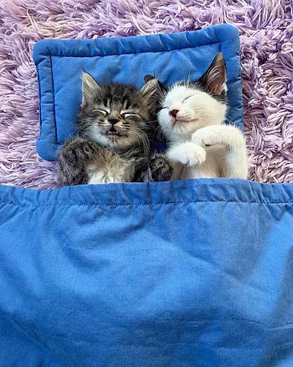 Os gatinhos Howie e Bo.