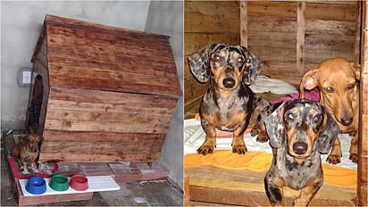 Mulher compra pela internet casinha para as suas cachorrinhas e recebe uma mansão.