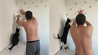Gatinho ajuda tutor a decorar o quarto de bebê que está por vir.