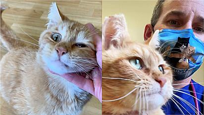 Médico veterinário que atua em Fort Mitchell, Kentucky, Estados Unidos, decide não sacrificar gatinho ruivo.