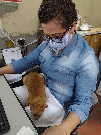 O gatinho adora ficar por perto de Conceição.