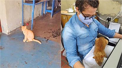 Mulher resgata gato que apareceu na porta do seu trabalho em São Paulo.