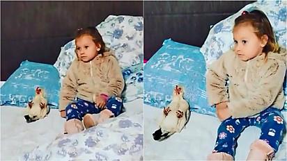 Criança e galinha protagonizam linda amizade.
