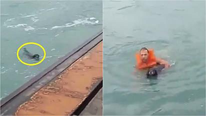 Homem salva cachorro que caiu no mar no litoral norte de São Paulo.