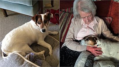 Idosa adota cão idoso ao ver sua fotinho em um site de abrigo de animais.