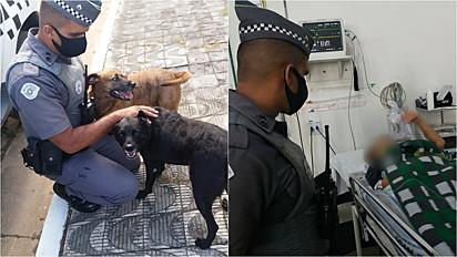 Cães ajudam socorrer a sua dona através de latidos insistentes para vizinhos.