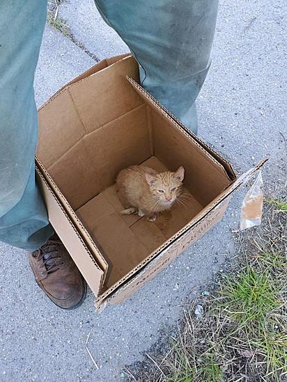 O gatinho Hopper.