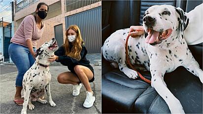 Marina Ruy Barbosa adota cachorro adulto e surdo.