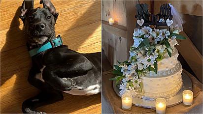 Cachorro que reside em fazenda que recebe eventos em West Sand Lake. Estados Unidos, morde o bolo da noiva.