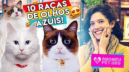 10 raças de gatos com olhos azuis