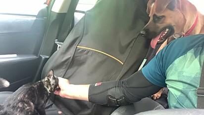 O gatinho foi resgatado e levado para o abrigo de animais.