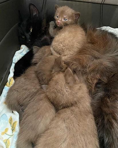 A linda família felina.