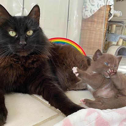 Mars é muito protetora com seus filhotes.