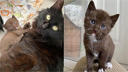 Família felina é resgata e agora tem dias felizes em abrigo de animais.