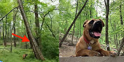 O cachorro fez com que seu tutor parasse para ver o animal que ele encontrou.