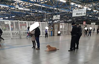 A cachorrinha é muito amada pelos funcionários do local.