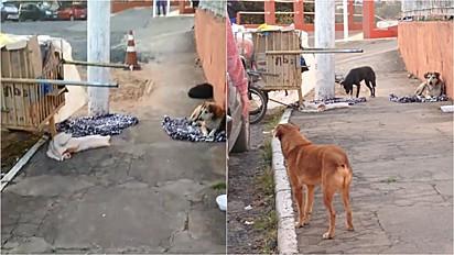 Cachorros aguardam dono catador de recicláveis internado em Santa Catarina.
