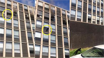 Gato pula de quinto andar de prédio em chamas em Chigago, Illinois, Estados Unidos e fica ileso.