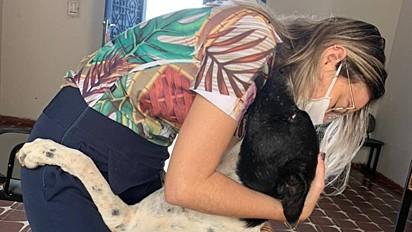 Dócil, o cachorro adora receber um abraço.