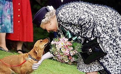 A rainha com um dos seus corgis.