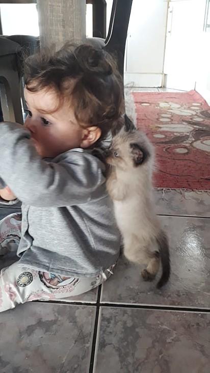O gatinho Memi e a Luiza, com 10 meses de vida.