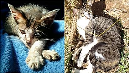 Gato abandonado em caixa de papelão, é resgatado e ganha nova vida.