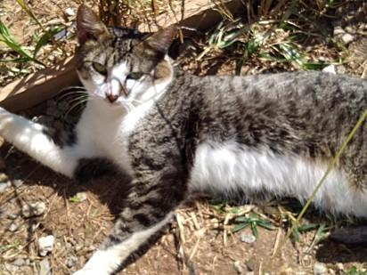 Bento se tornou um lindo gato.