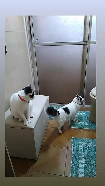 Esta gatinha esta se preparando para subir ao trono.