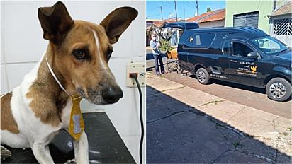 Cachorro é resgatado em casa depois de três dias do falecimento de sua tutora no Jardim Itamarati, em Jaú, São Paulo.