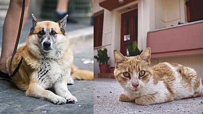 Governador de SC sanciona lei que prevê multa de até R$ 20 mil para maus-tratos de animais.