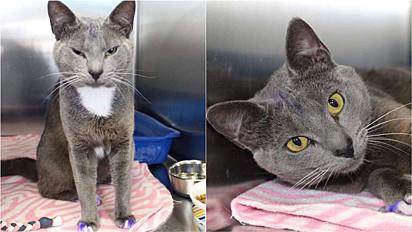 Gato com patas roxas é resgatado da ruas da Flórida, Estados Unidos, e aguarda lar amoroso.