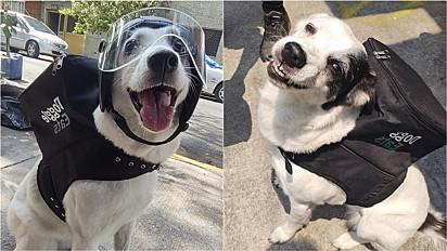 Cachorra vira entregadora para ajudar abrigo de animais que a acolheu na Cidade do México, México.